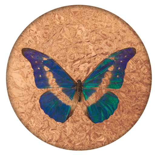 cropped-circlebutterfly-e1624127227323.png